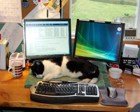 Mr. Kitty on my desk