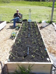 garden-bed-1