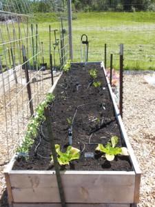 garden-bed-4
