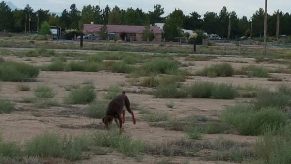 Duke in the desert; RV park behind.